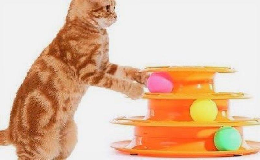 اسباب بازی های مورد نیاز گربه
